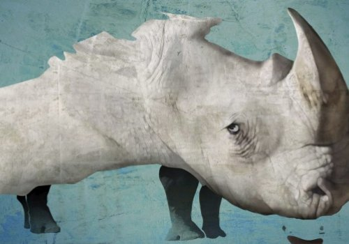 The Australian Rhino Project: one man's remarkable battle against savagery